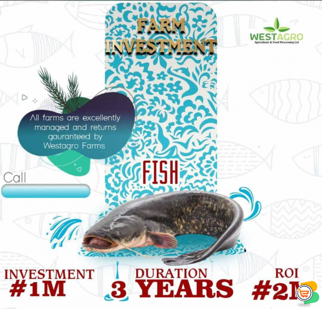 Invest and Earn 100% of your Investments For 3 Years, from Our Fish Farm