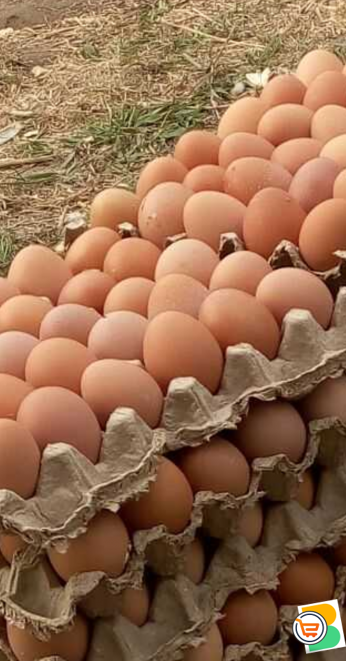 Fresh eggs for sale direct for farm.