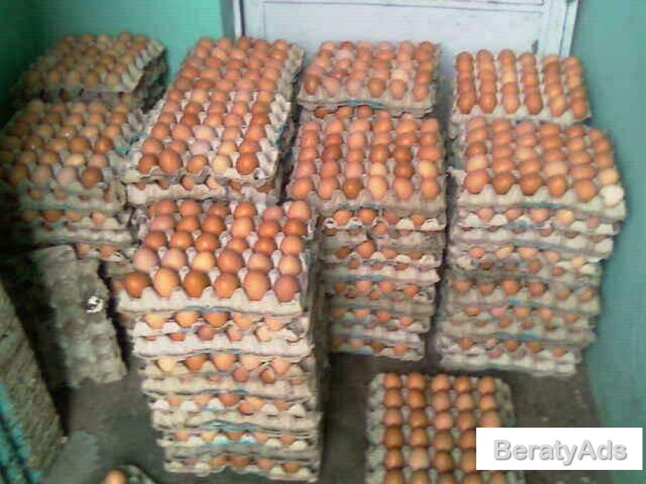 Eggs Supply In Bulk