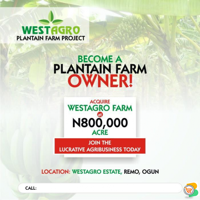 Invest in Plantain Farm and Get return on Investment every 6 months