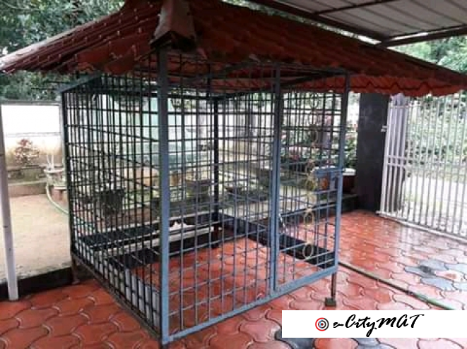 Strong dog iron cage for sale